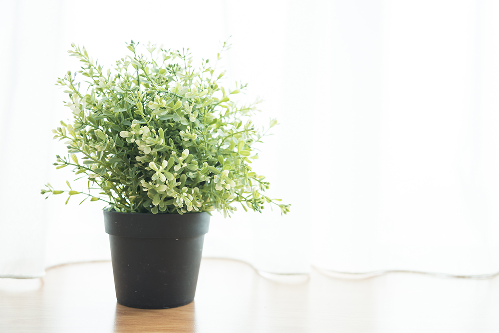 6 Houseplants to clean your air and lighten your apartment